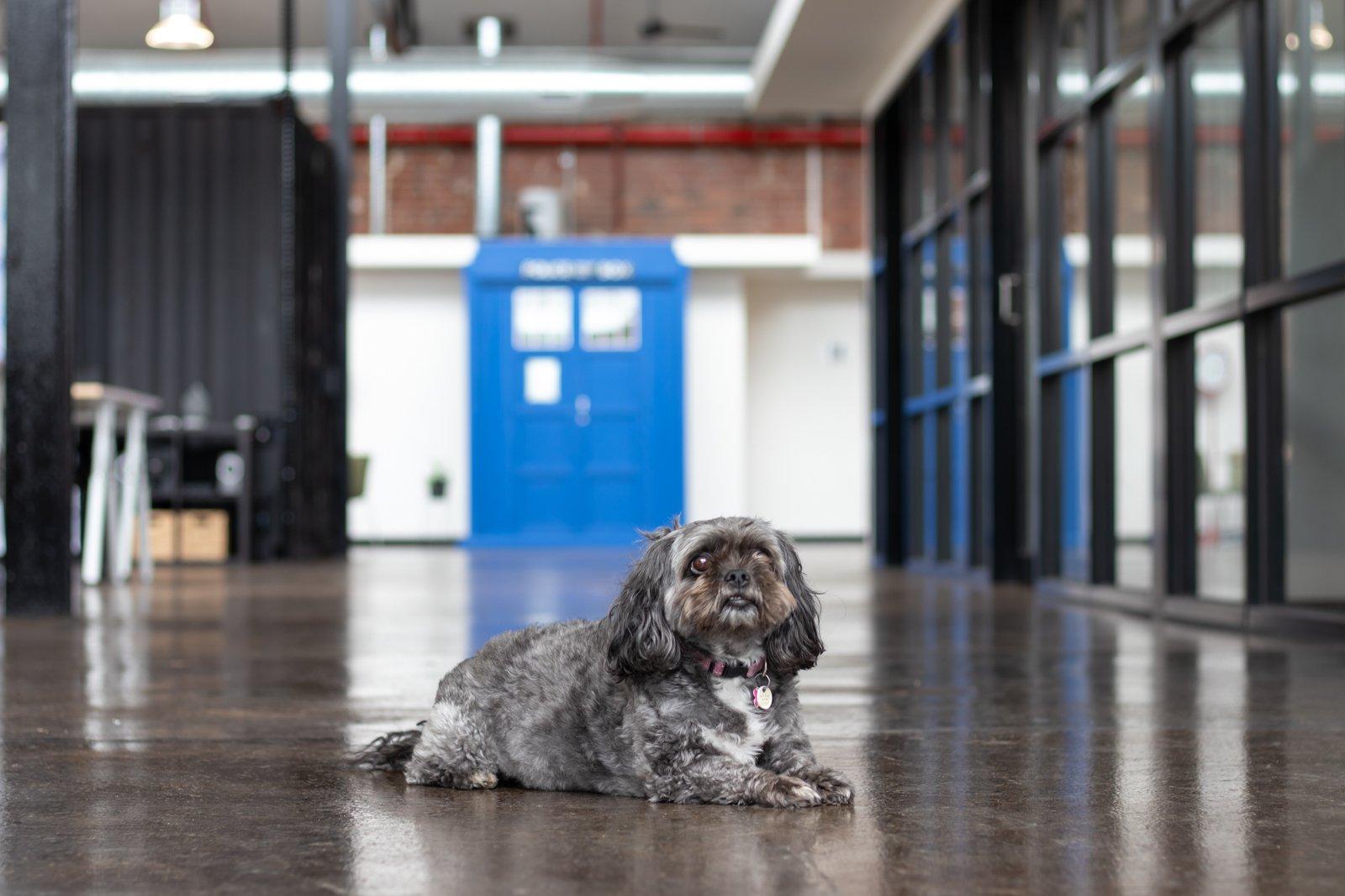 a dog sitting on the floor inside Runway Geelong