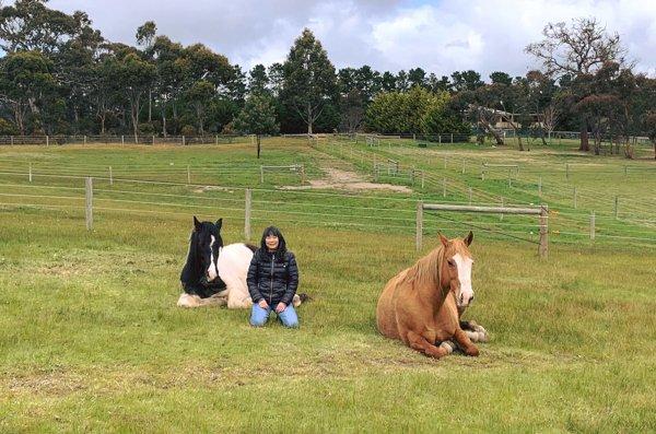 Linda Wong horses